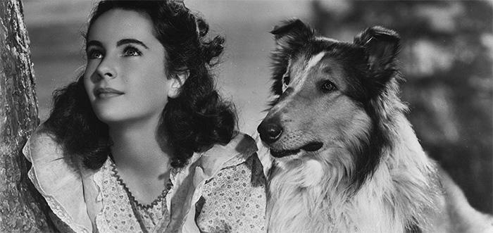 lassie-has-come-home